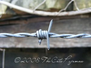 Barb_wire